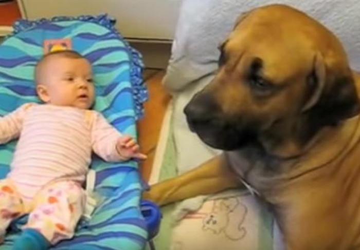 beba-pas-kijanje