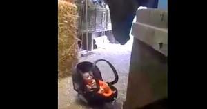 beba-konj