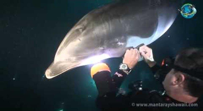 delfin-pomoc