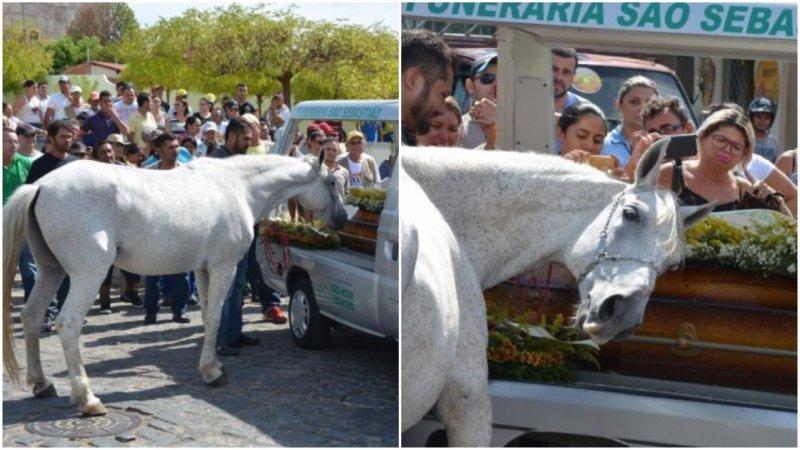 konj-sahrana