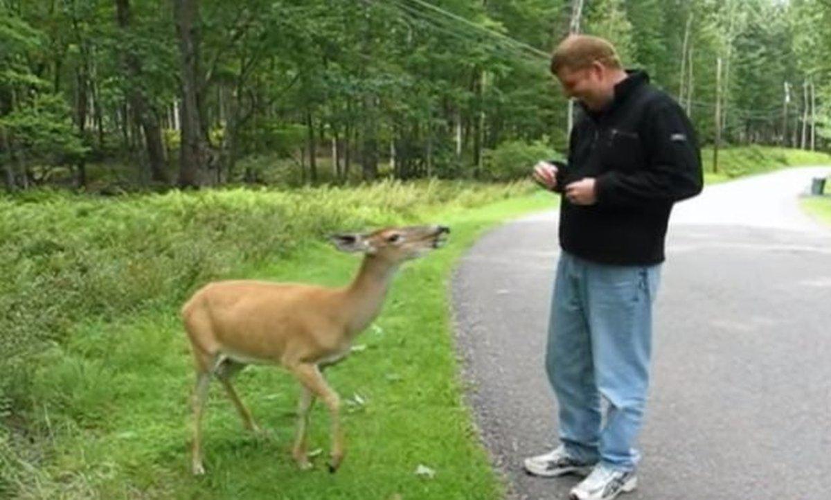 jelen-hrana