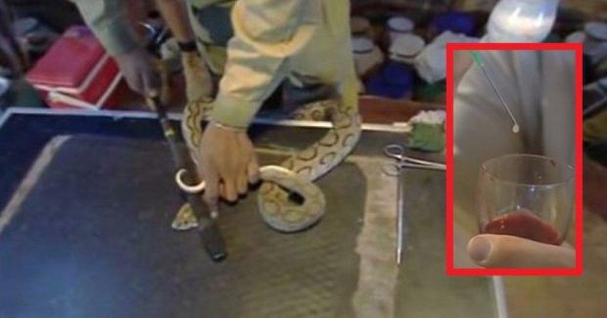 otvor-zmije
