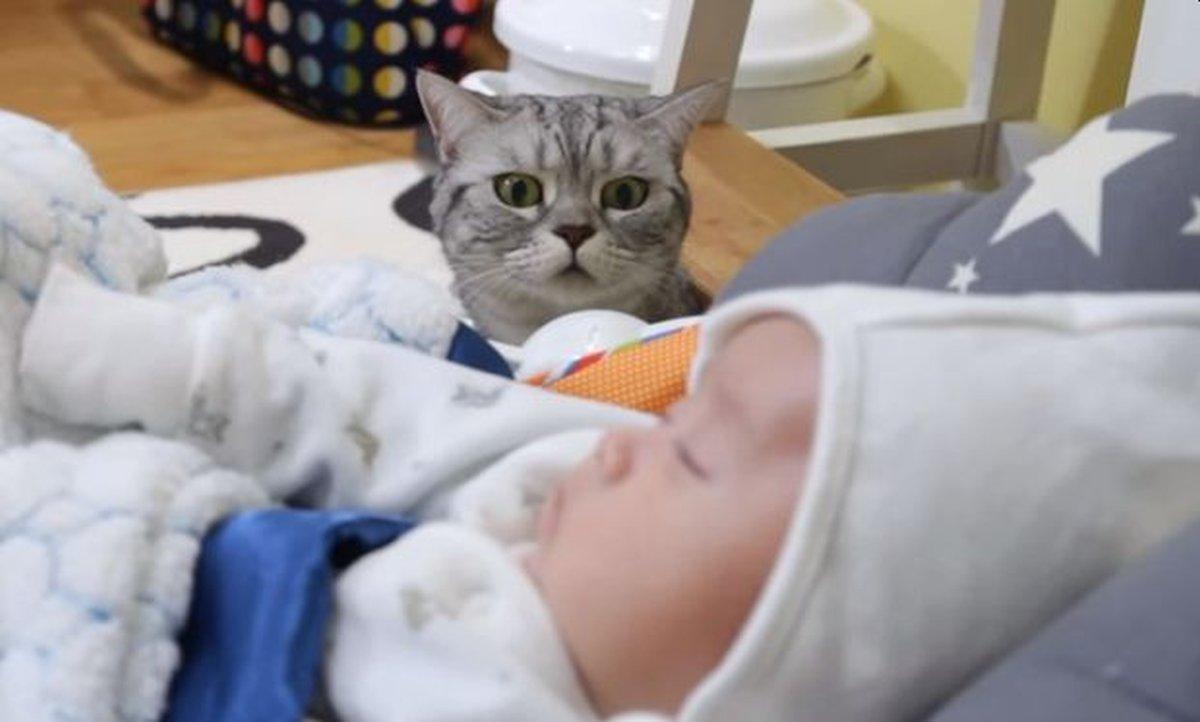 novorodjence-macka