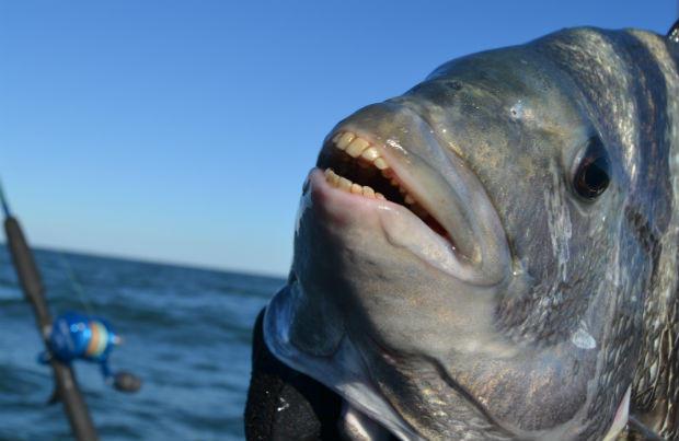 riba-zubi-kao-u-covjeka-5
