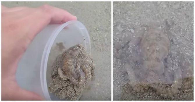 hobotnica-foto