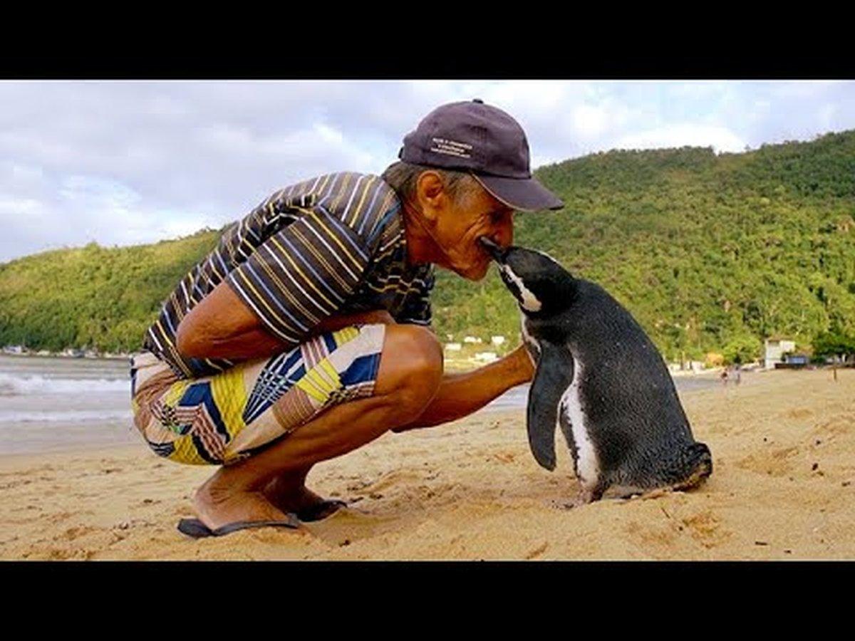 spasio-pingvina
